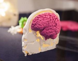 3D Printed Educational Models